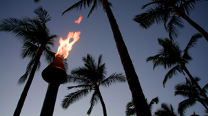 Palm trees in shadow and a lit tiki torch